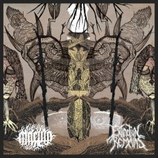 MACULA / EXCTINCTION REMAINS - Split (2020) CD